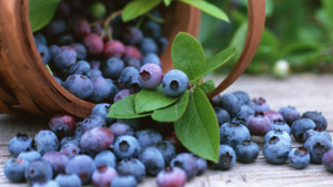 blueberries [homelifecomau]